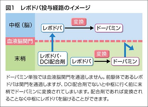 レボドパ投与経路のイメージ